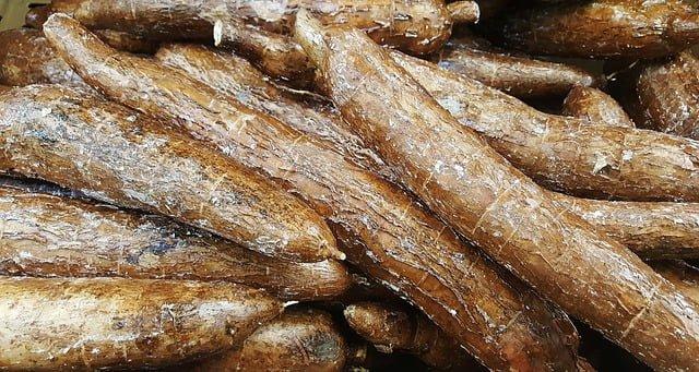 Cassave of Maniok