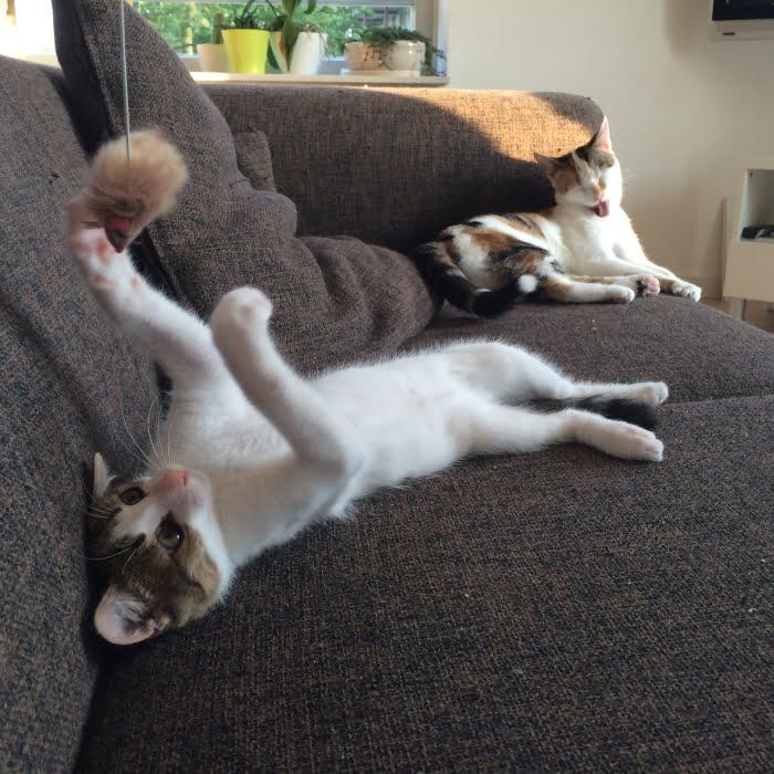 Twee Paleo katten