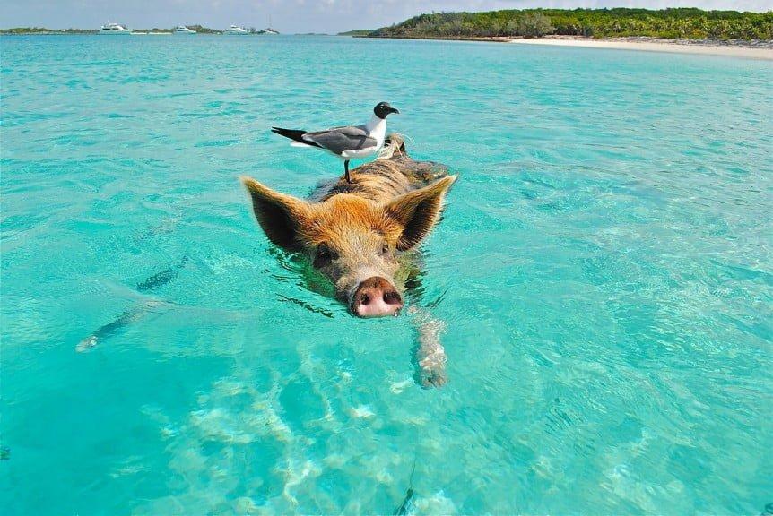 Proteïnen: vis, vlees, gevogelte...